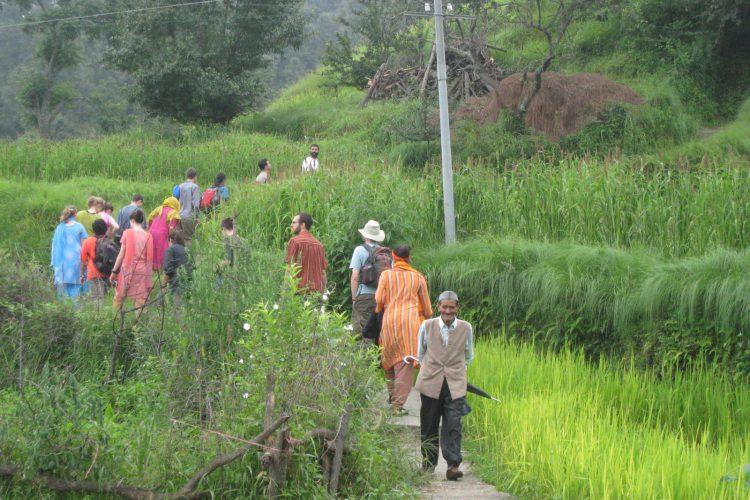 Nature walk amidst fields